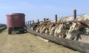 Мелким сельхозпроизводителям предложат объединяться в кооперативы