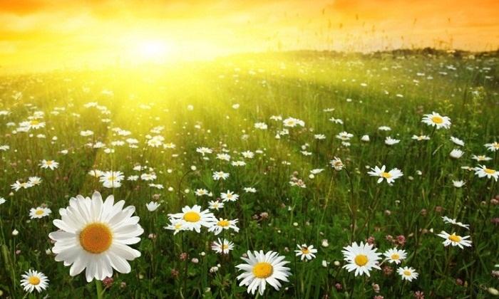 13 июля на всей территории Казахстана сохранится теплая погода По сообщению...