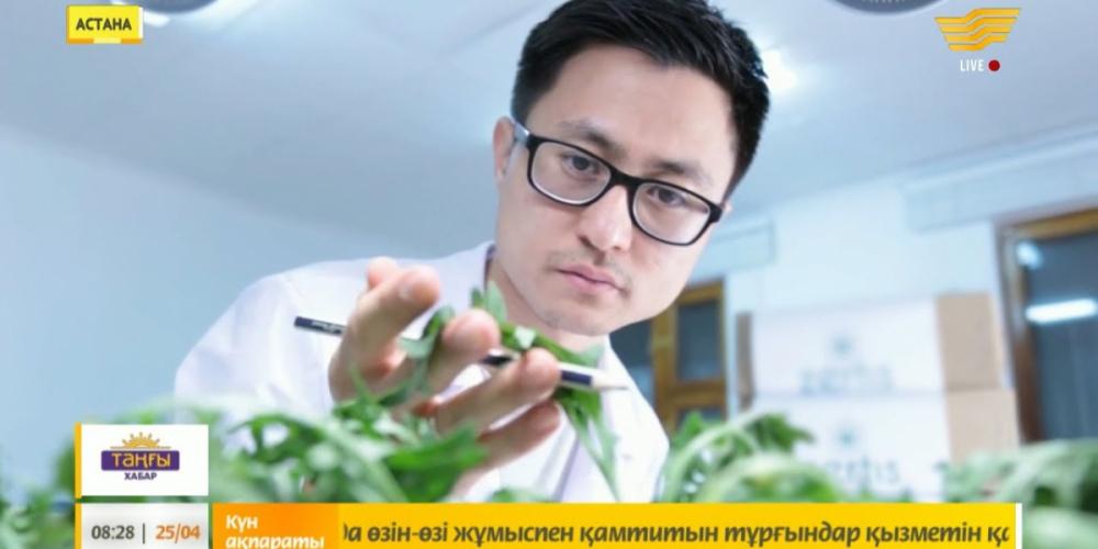 Өсімдіктің топырақсыз өскенін көрдіңіз бе?